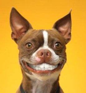 Dog-Smile-2